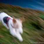 Jugando con la velocidad de obturación, un perro…